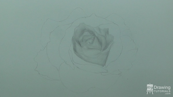 Rose Drawing 4