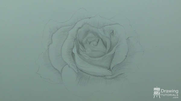Rose Drawing 6