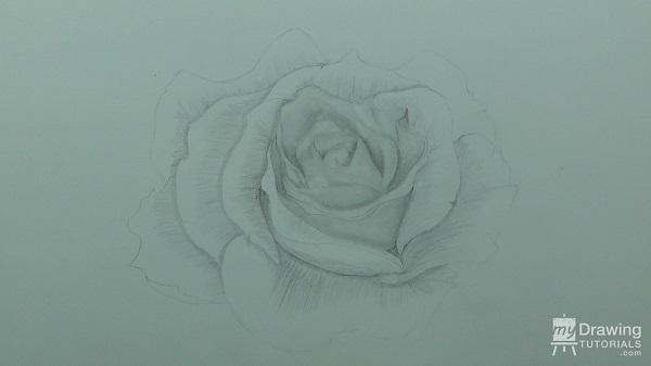 Rose Drawing 6